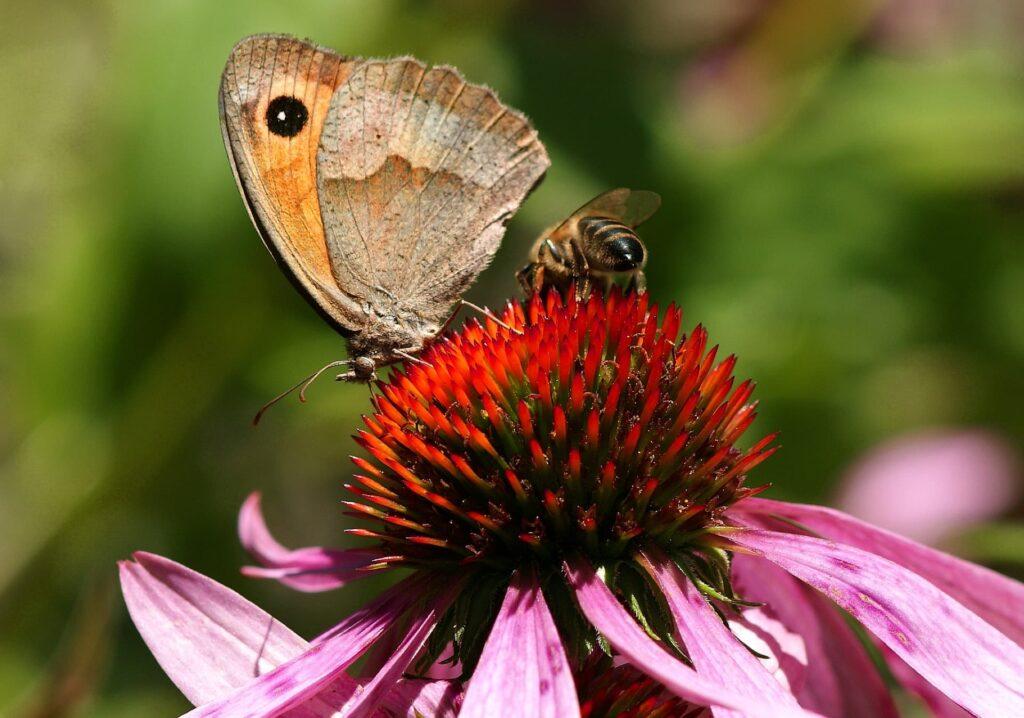 röd solhatt med fjäril