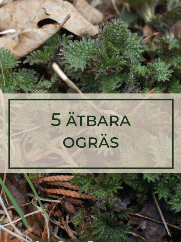 5 ätbara ogräs