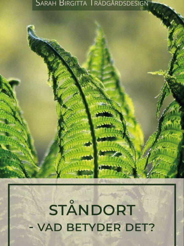 Växters ståndort