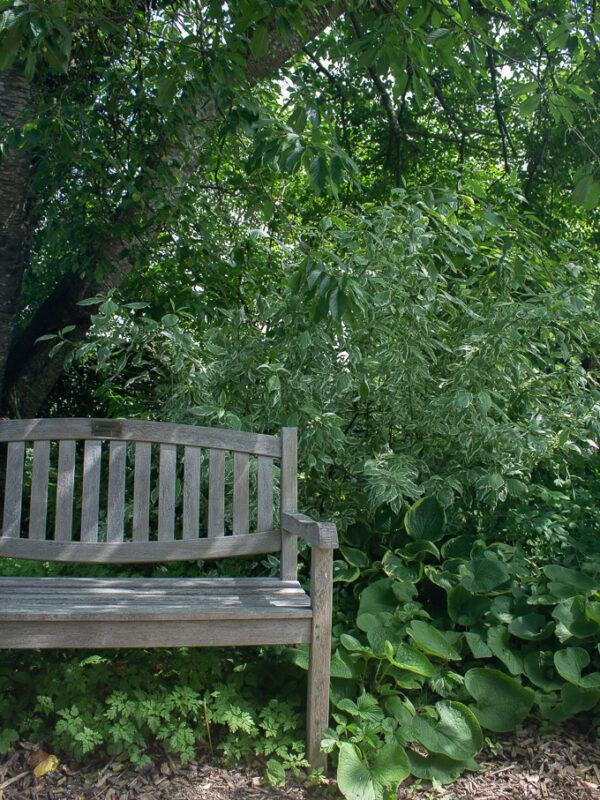 Bänk i den engelska trädgårdens woodland
