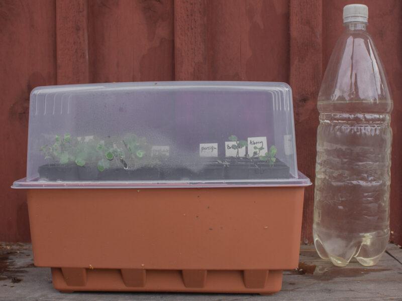 Ny sådd av bladgrönsaker